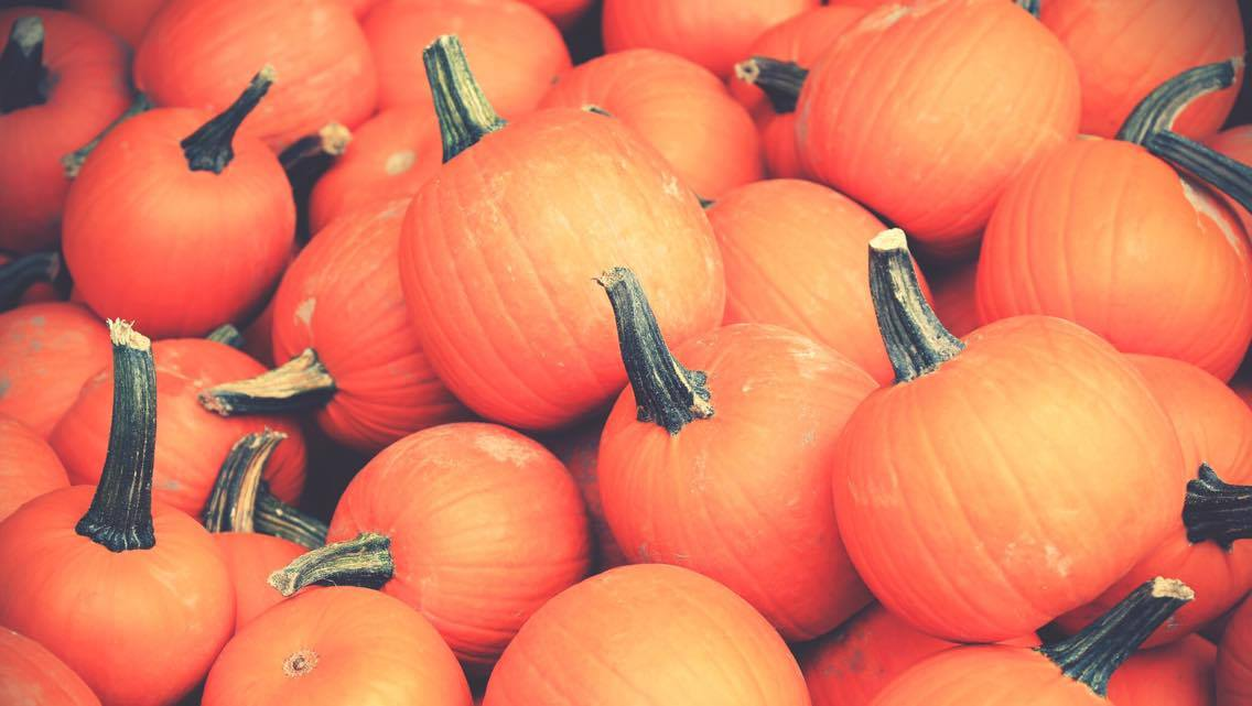 mes-courges-damour_photo-1
